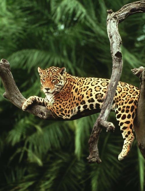 Resting in tree.....