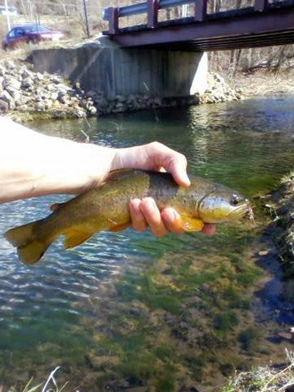 Minnesota driftless fly fishing trip report after work for Driftless fly fishing