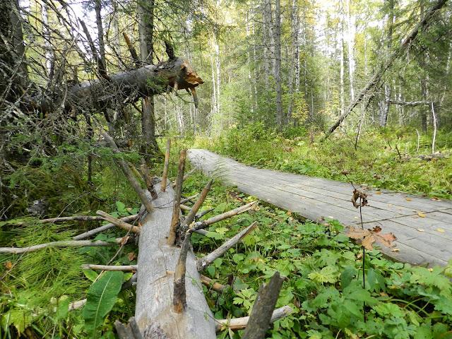 Деревянный настил тропы на хребет Зюраткуль