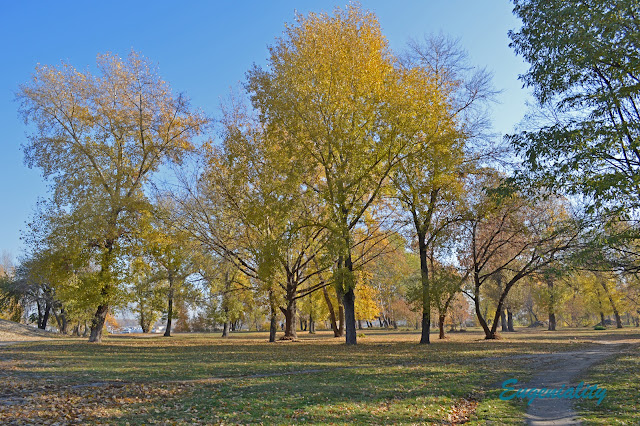 """Осенние деревья в парке """"Наталка"""""""