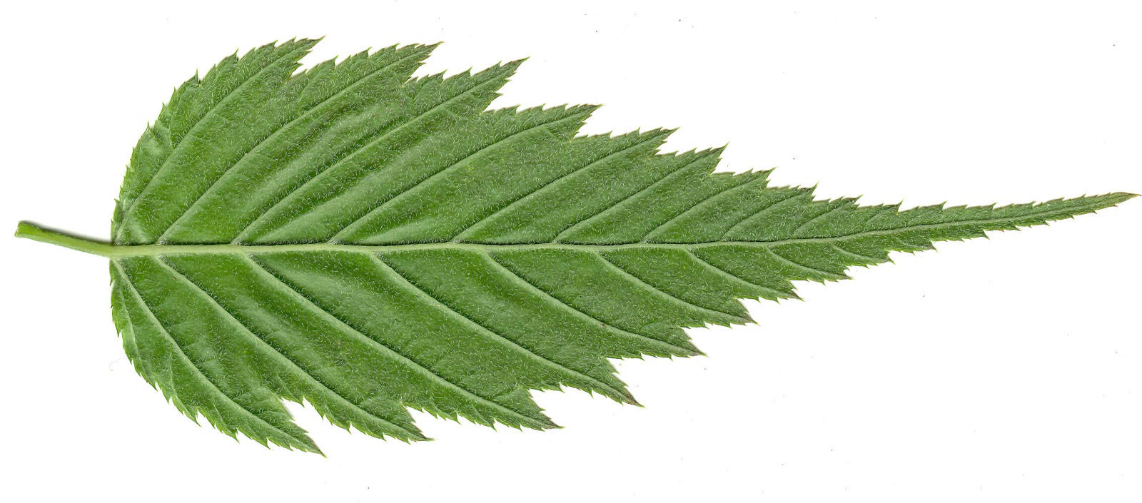 HIGH RESOLUTION SEAMLESS TEXTURES: Leaf Textures