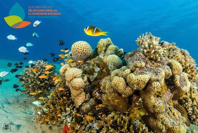 El 22 de mayo se celebra el Día Internacional de la Diversidad Biologica