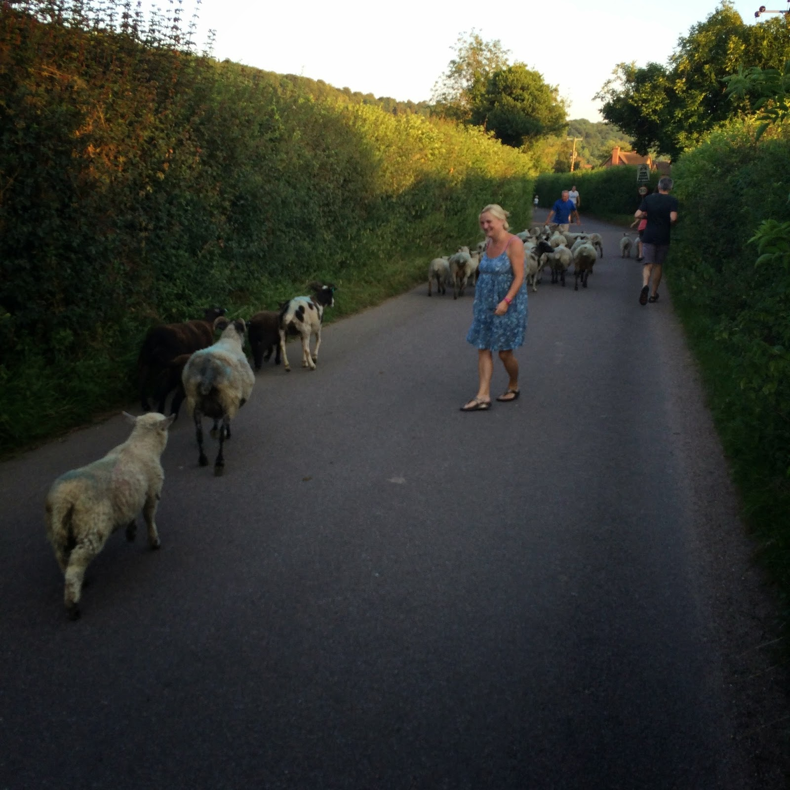 madmumof7 shepherding