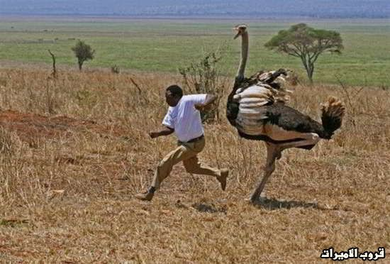 صور  من افريقيا  مع  التعليق ! 14.jpg