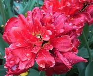Primavera en flor