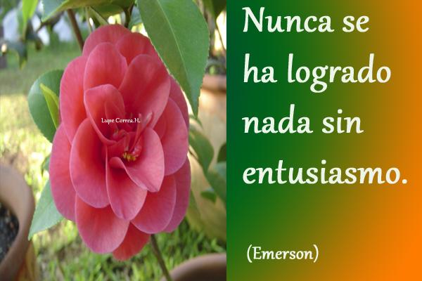 Graficas_Portugues
