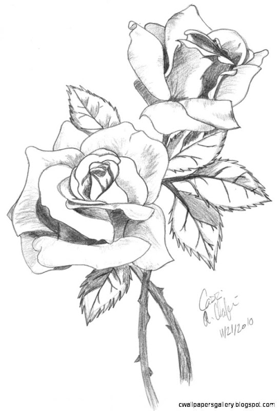 Rose Drawings In Pencil  Rose Drawing in Colored Pencil   The