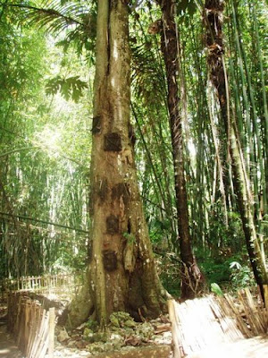 Mayat Berjalan dari Toraja