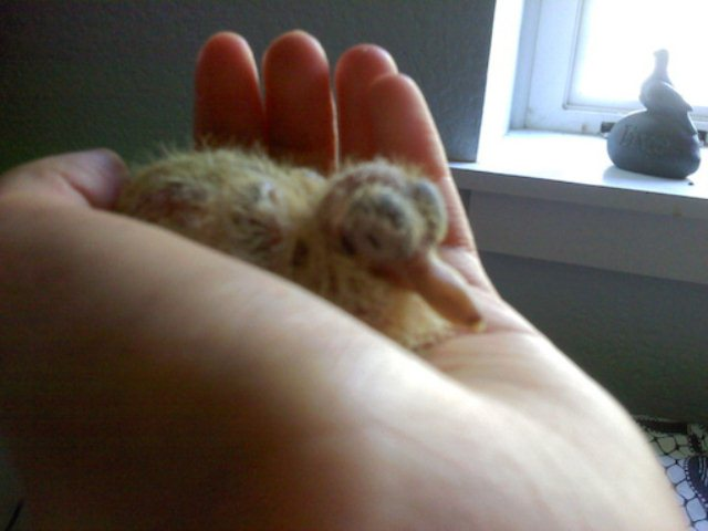 raising a bird, day 6