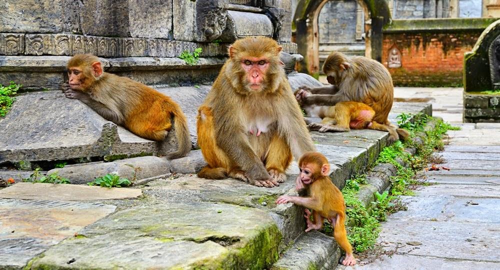 shutterstock 169713425 - Sangre del Mono: La Raza de Esclavos de los Dioses
