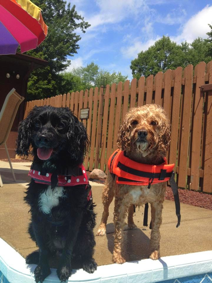 Sweet Catastrophe Blog | Tobie & Mia in Life Jackets