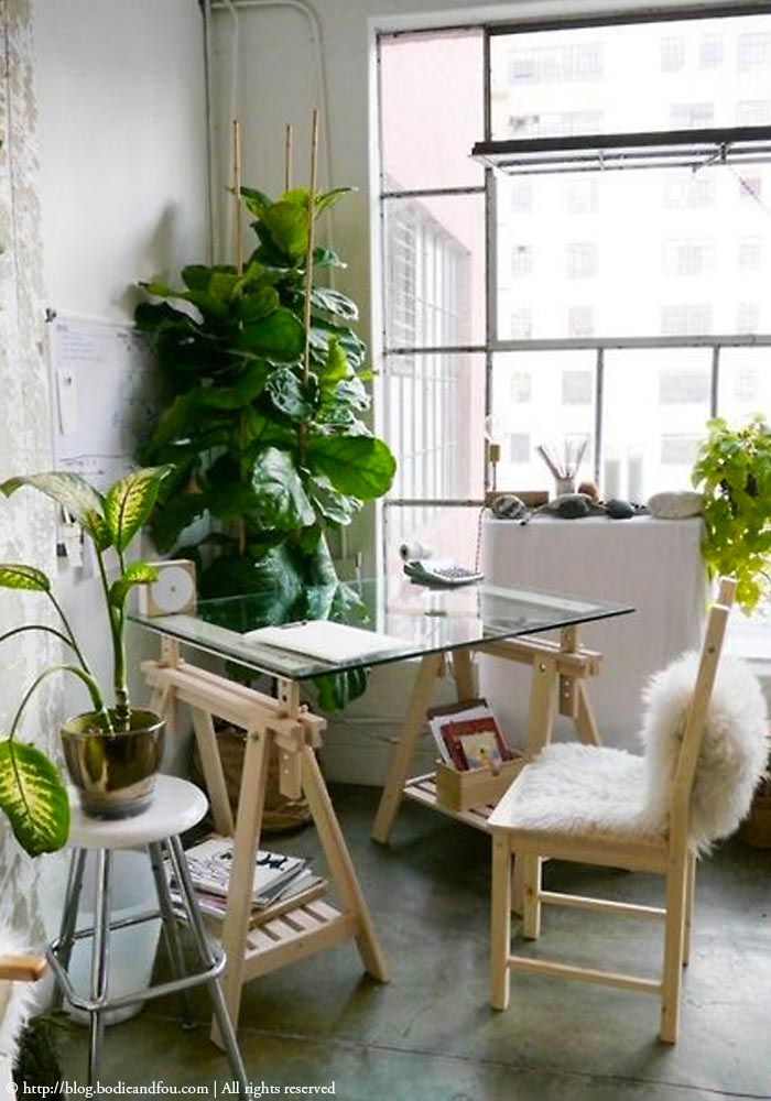 Original  Designs Blog  Styling Essentials  Plants For Decorating Your Home