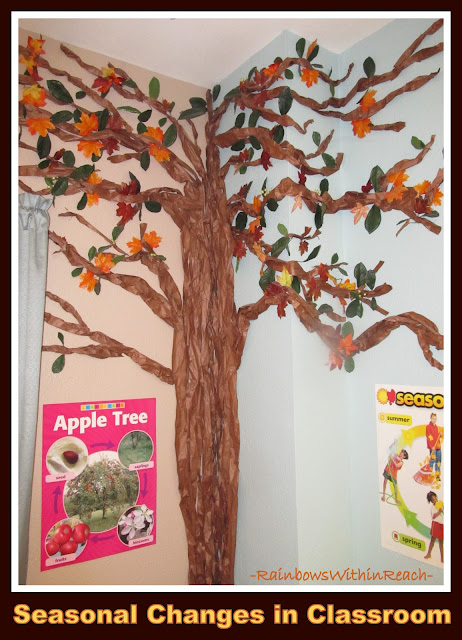 Tree Changes with the Seasons in the Classroom Setting (Tree RoundUP via RainbowsWithinReach)