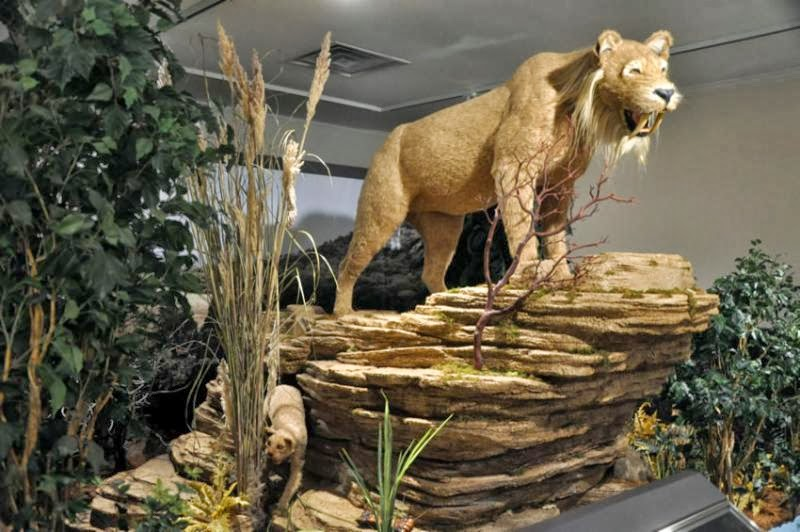 Fun Things To Do With Kids Ice Age Imperials Opens At The - The history of delaware