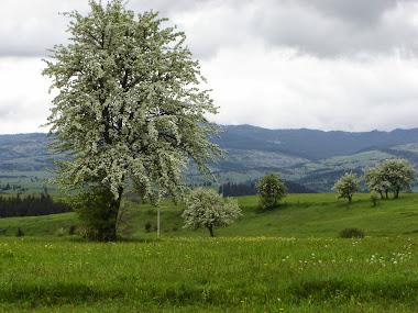 Măreția primăverii - Filpea
