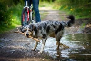 Adoptar perro callejero
