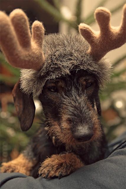 Weihnachtskostüm Hund selbstgemacht