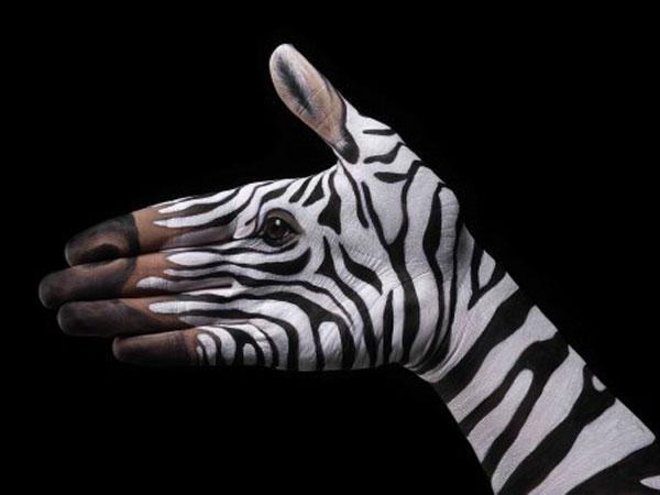 Zebra-on-blac