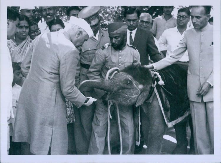 Prime Minister Jawaharlal Nehru Feeds Baby Elephant - 1961