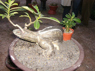 Uniquely bonsai shaped iguana