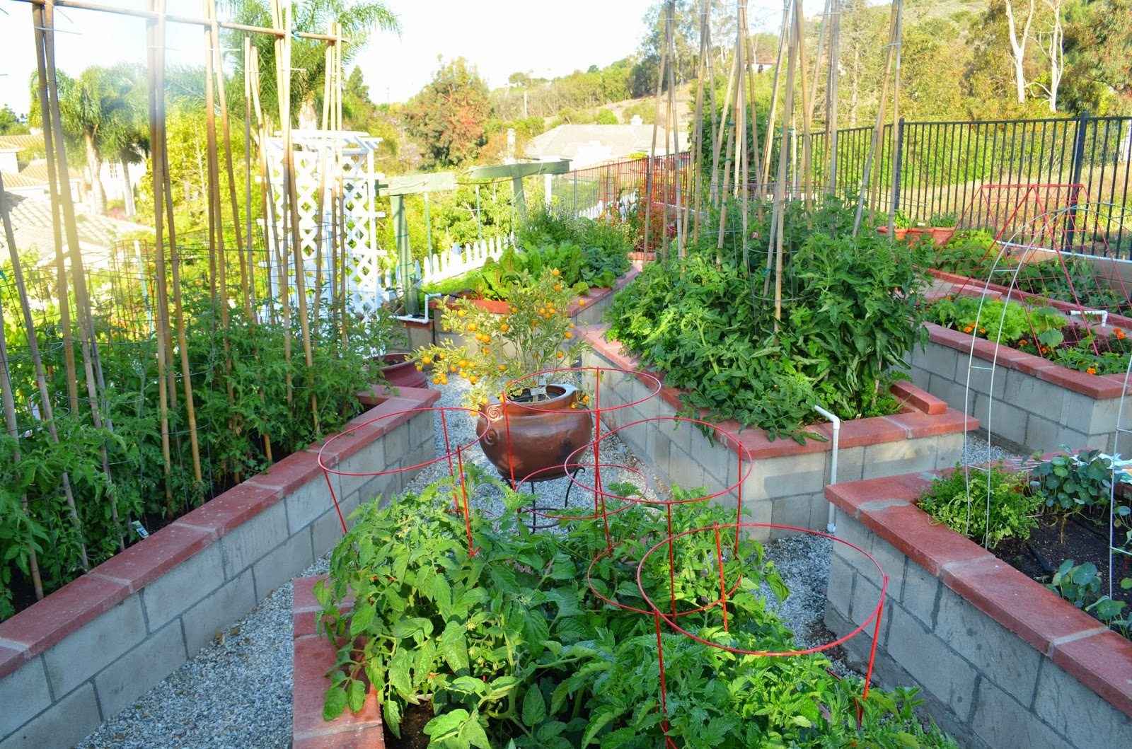 Entertaining From an Ethnic Indian Kitchen Garden tour 2 The
