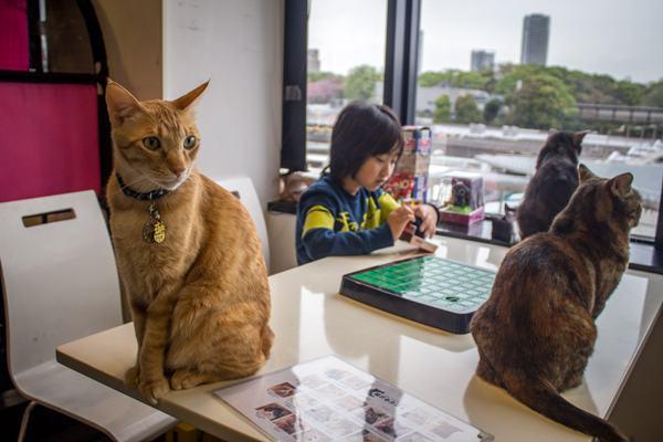 japan-pets