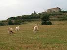 El Pla de Sant Nazari amb Vilalta al fons