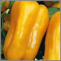 Сладкий перец сорт «Рубик»
