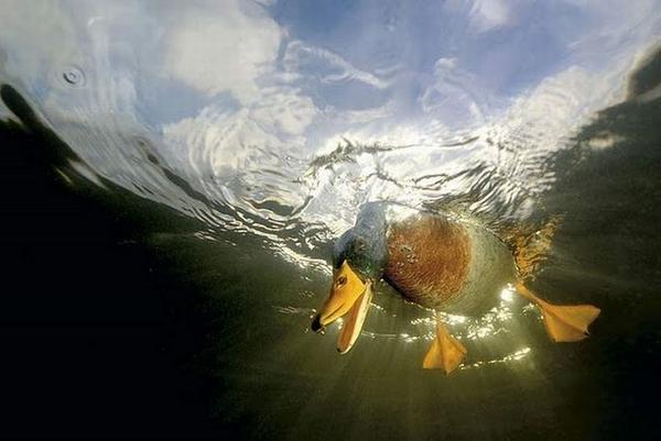 Fotos Increíbles y Sorprendentes