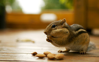 Chipmunks Wallpapers