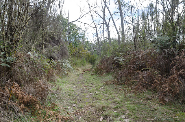 track in cobboboonee state forest on great south west walk