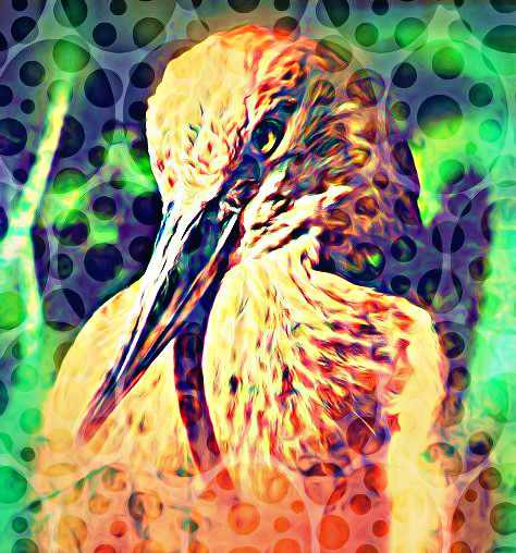 Impundulu the Lighting Bird Tale of Chaos Africa Myth ...