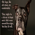 Οι ηλικιωμένοι σκύλοι είναι σαν...