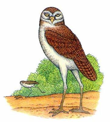 lechuza prehistorica Ornimegalonyx