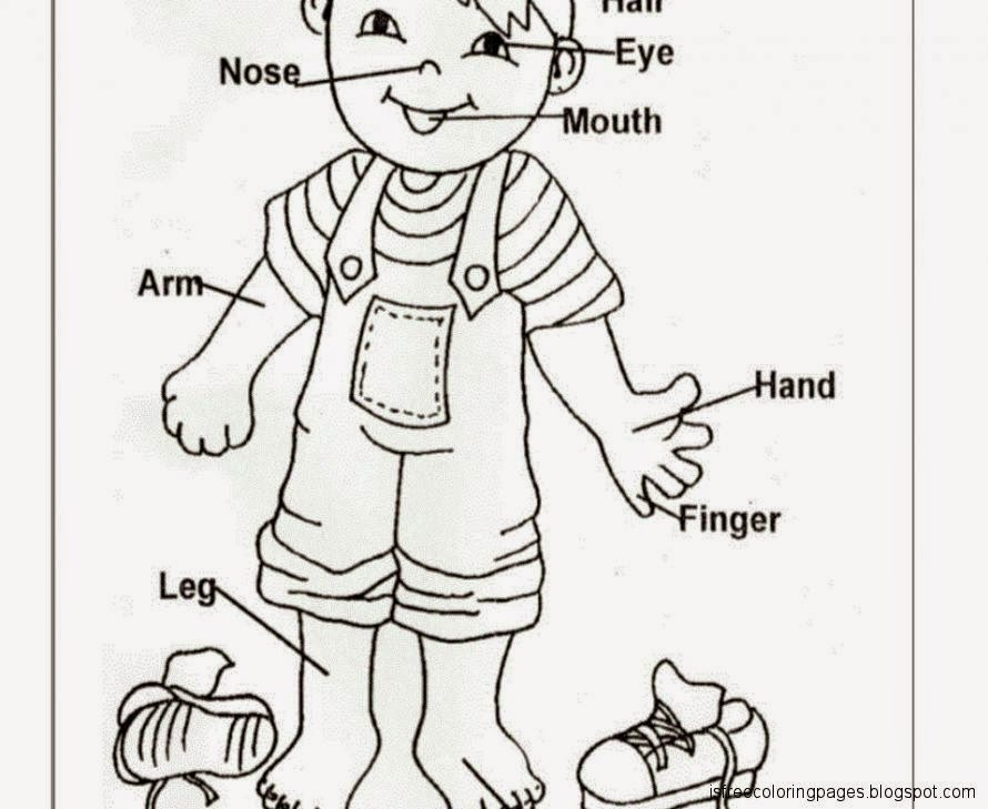 Bodyparts Coloring Pages Free Coloring Pages