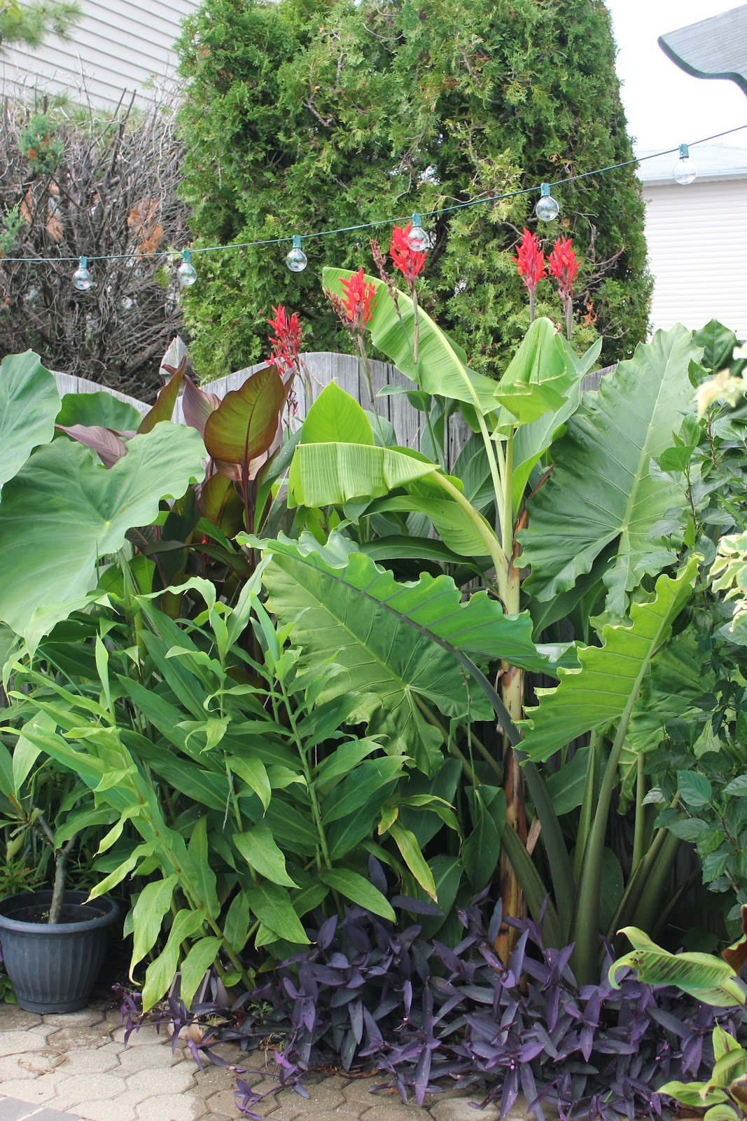 tropical gardening in new york city 2012