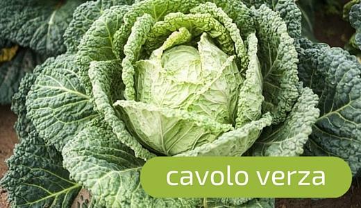 Cavolo verza: scopriamo una delle verdure invernali