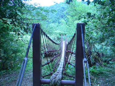 Bridge in the Jungle