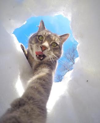 Foto Kucing Yang Gemar Selfie 03