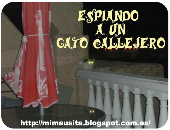 espiando-gato-callejero