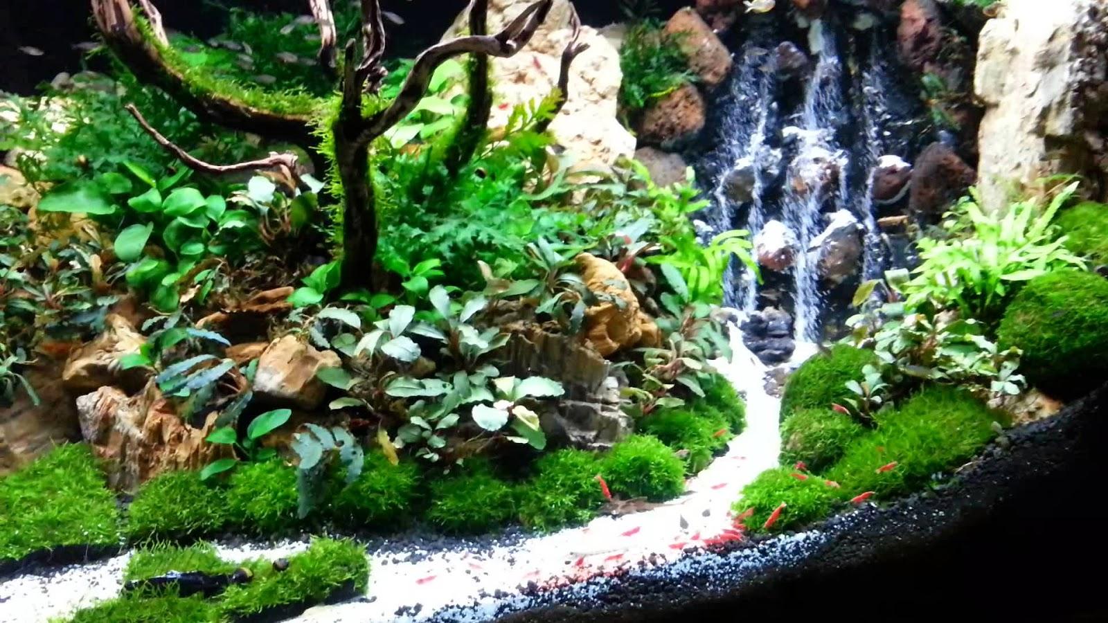 Aji aquascape apa itu aquascape - Gambar aquascape ...