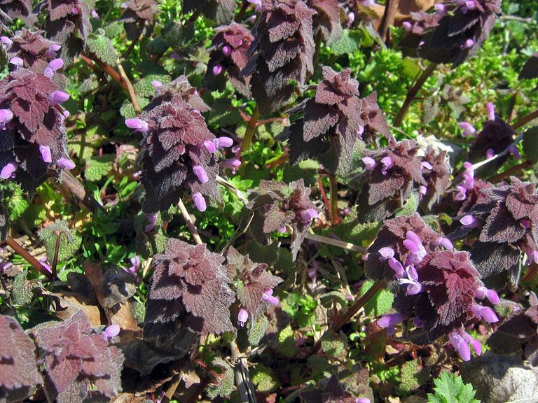 MOUND: Cool Weather, Flowering Weeds, Beach Farm