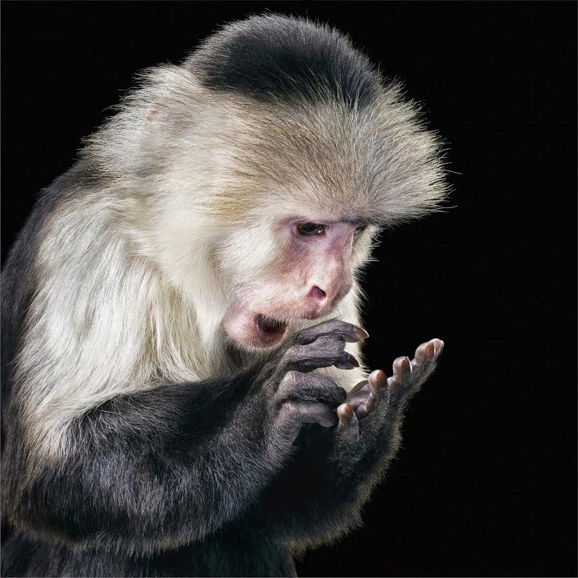 личность это процесс самоидентификации себя, обезьяна с удивлением рассматривает свои руки