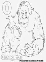 Belajar Mewarnai Huruf Abjad O Orangutan