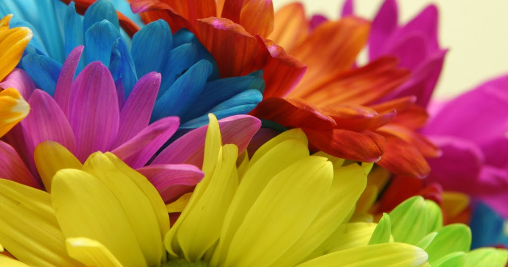 Flower Photos: Bright color flowers