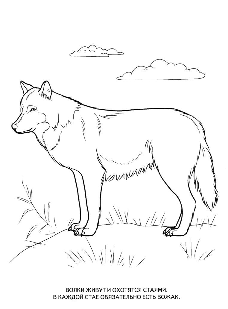 Раскраски с изображением животных