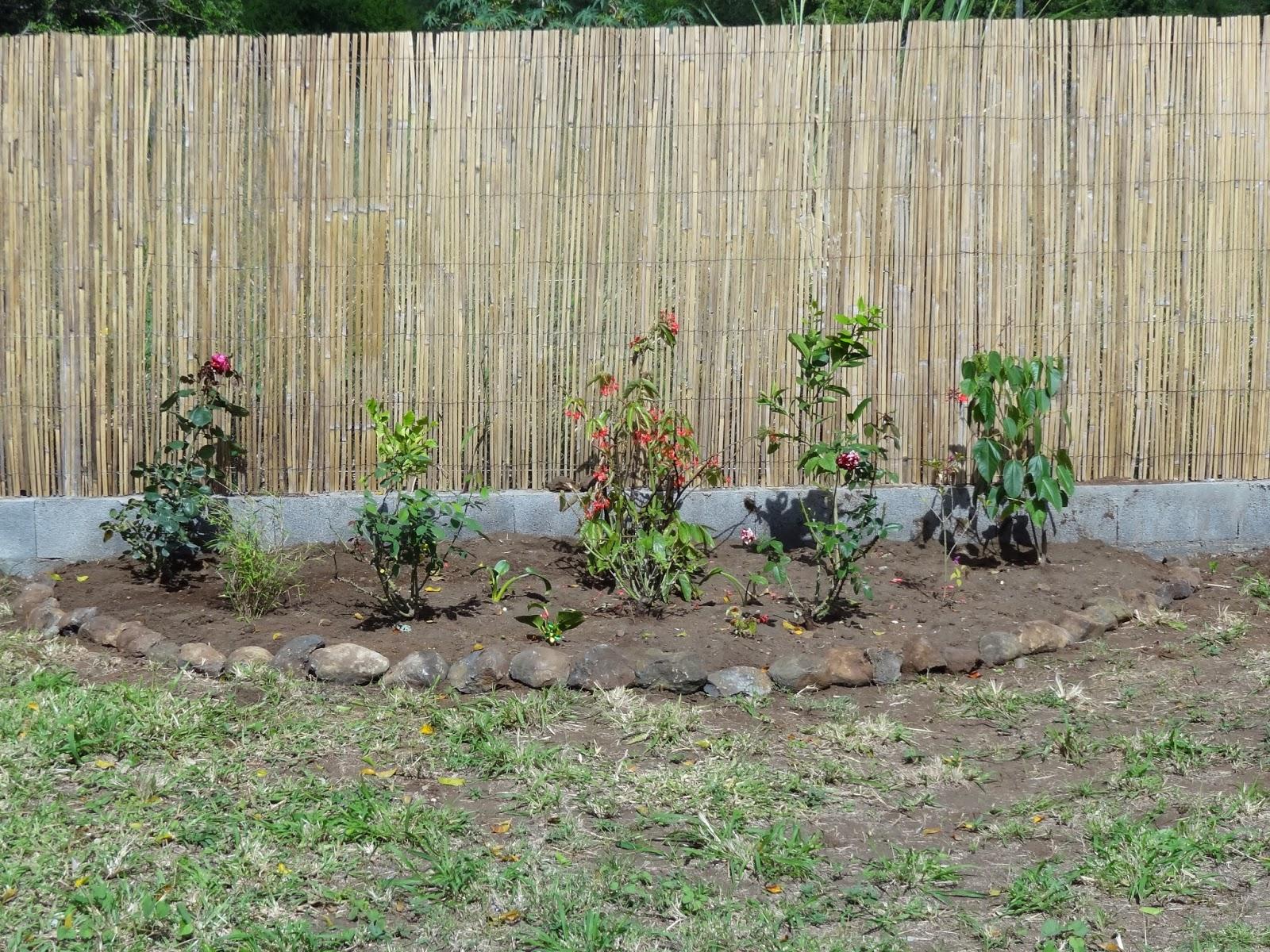 Que planter en juillet ordinary que planter en juillet abeliaxjpg recolte du latex dans une - Que planter en octobre au potager ...