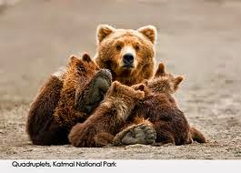 Mother Bears .... Sometimes you've got to wake up and be one.
