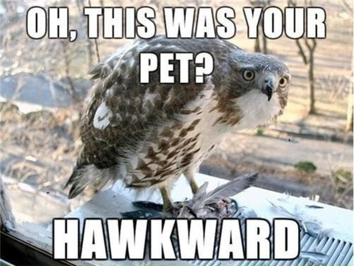 30 Funny animal captions - part 15 (30 pics) | Amazing ...