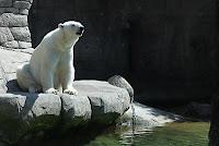Aalborg Zoo Danmark